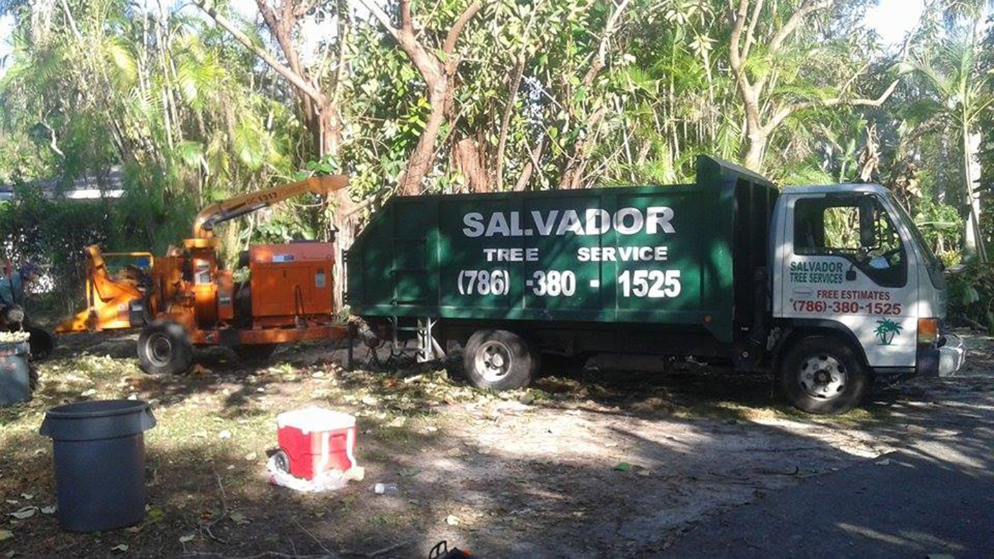Salvador Tree Service – Miami, FL